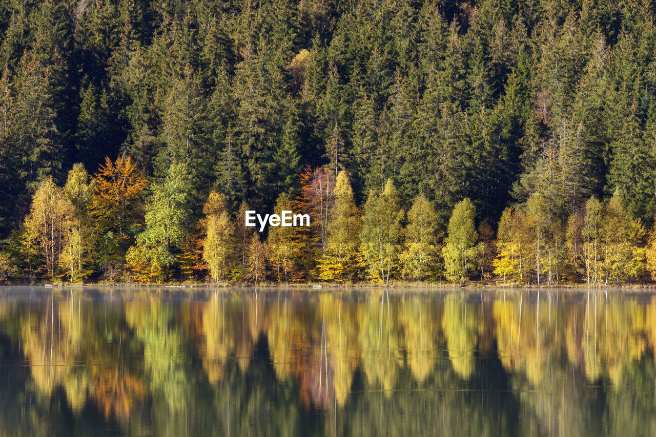 tree, reflection, plant, beauty in nature, tranquility, lake, water, tranquil scene, scenics - nature, autumn, waterfront, forest, no people, day, growth, nature, non-urban scene, land, green color, outdoors, change, coniferous tree, pine tree, pine woodland