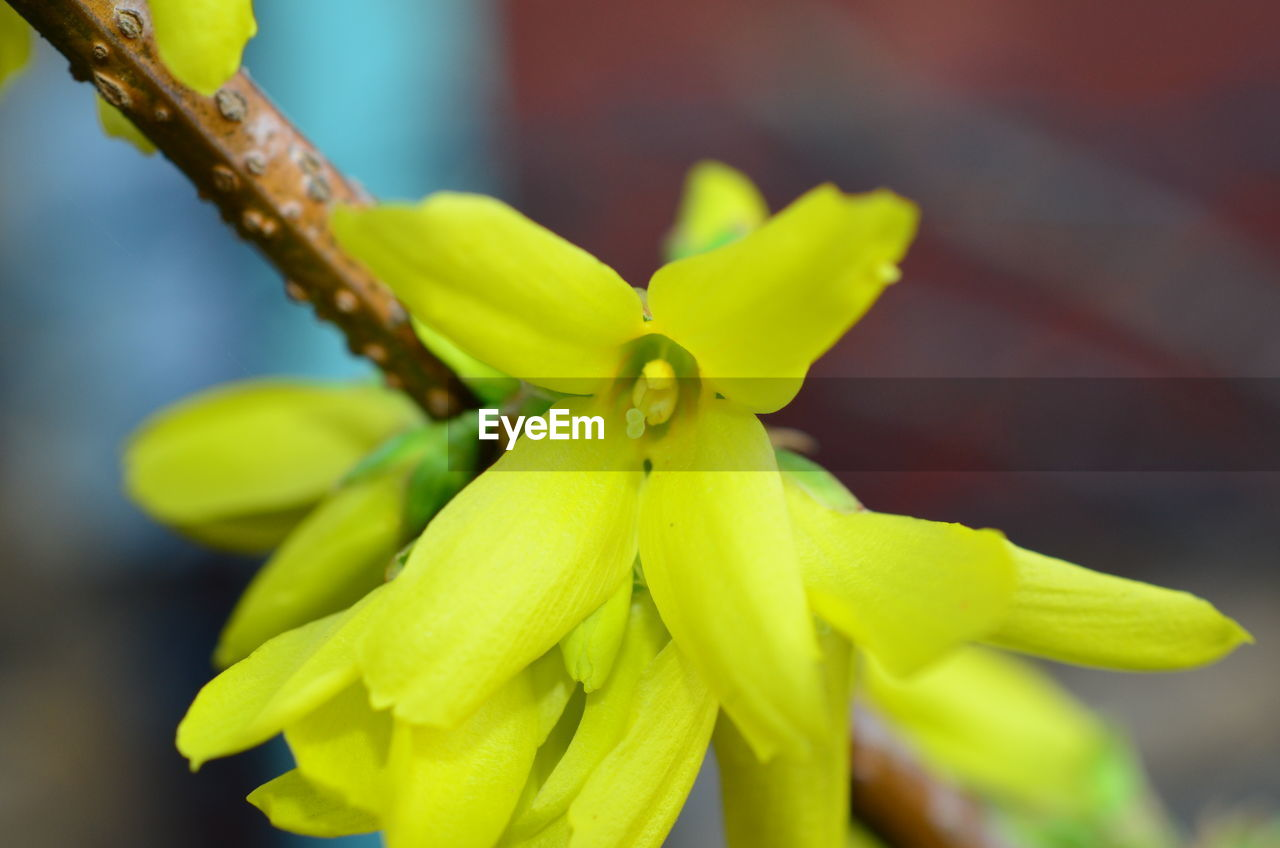 plant, growth, close-up, focus on foreground, beauty in nature, green color, no people, freshness, day, selective focus, nature, vulnerability, flower, fragility, flowering plant, plant part, leaf, yellow, petal, outdoors, flower head