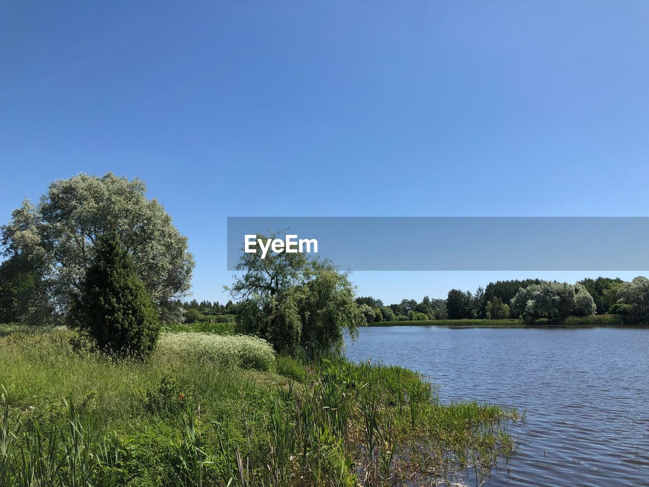 sky, plant, tree, clear sky, water, tranquility, tranquil scene, scenics - nature, beauty in nature, nature, grass, copy space, blue, growth, environment, landscape, no people, day, green color, outdoors