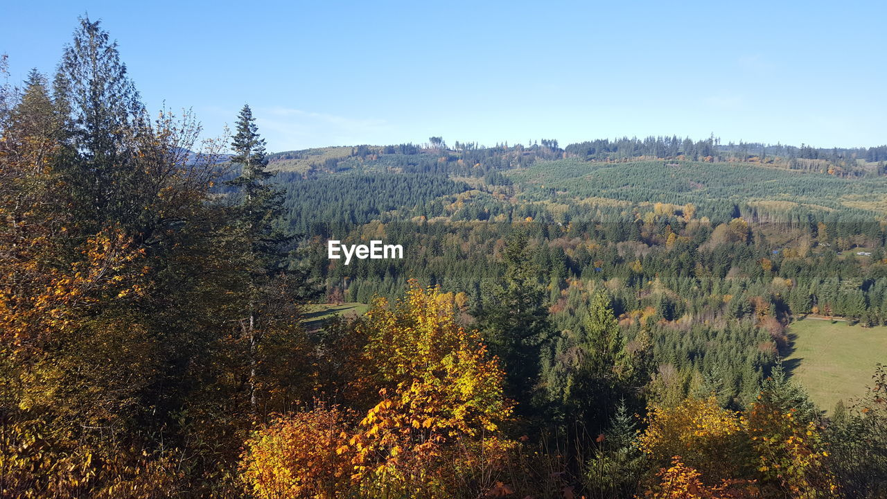 tree, plant, beauty in nature, tranquil scene, tranquility, growth, sky, forest, nature, scenics - nature, environment, non-urban scene, land, autumn, no people, day, landscape, change, outdoors, mountain, woodland, fall, coniferous tree