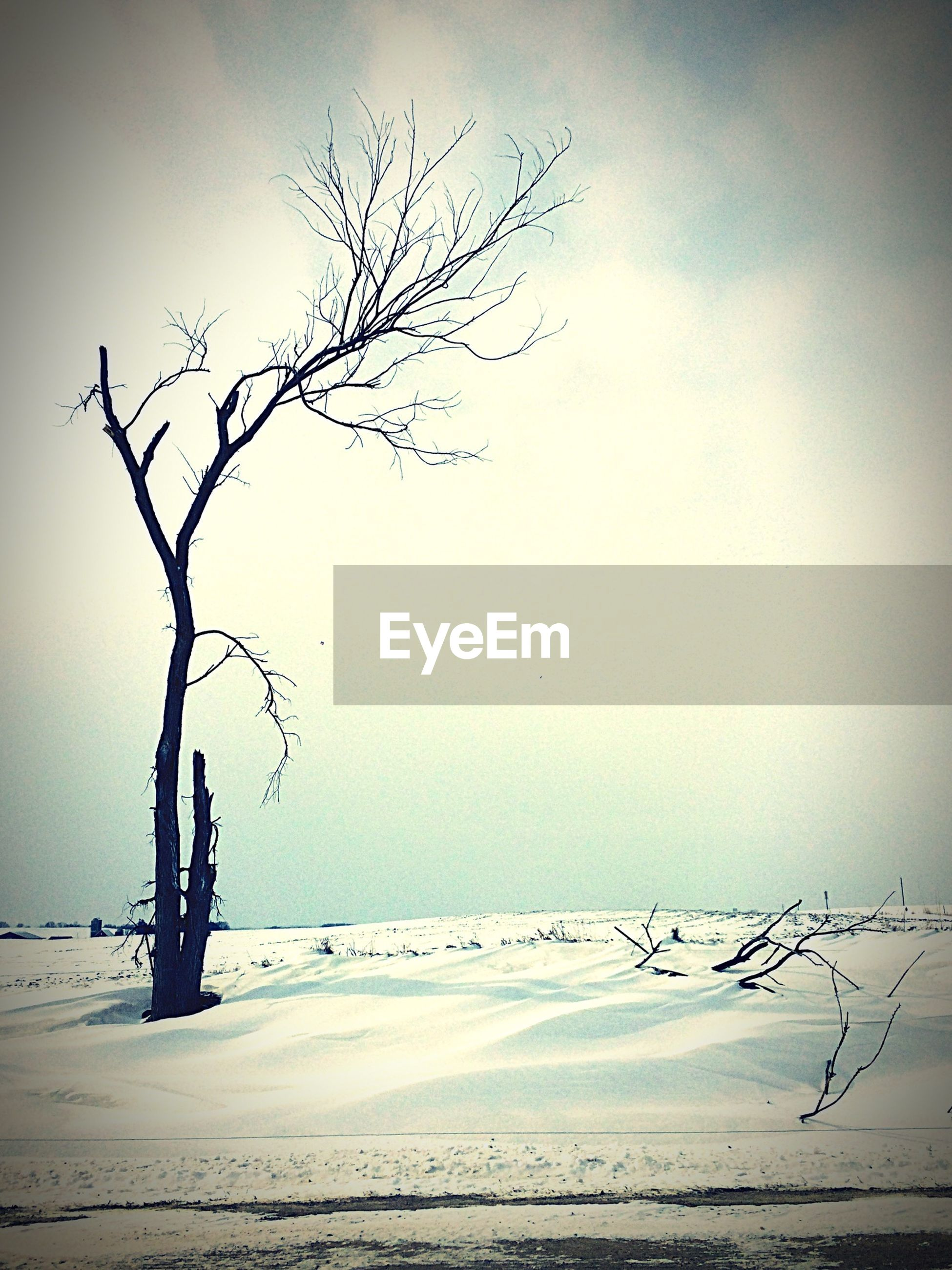 Bare tree on snowcapped field against sky