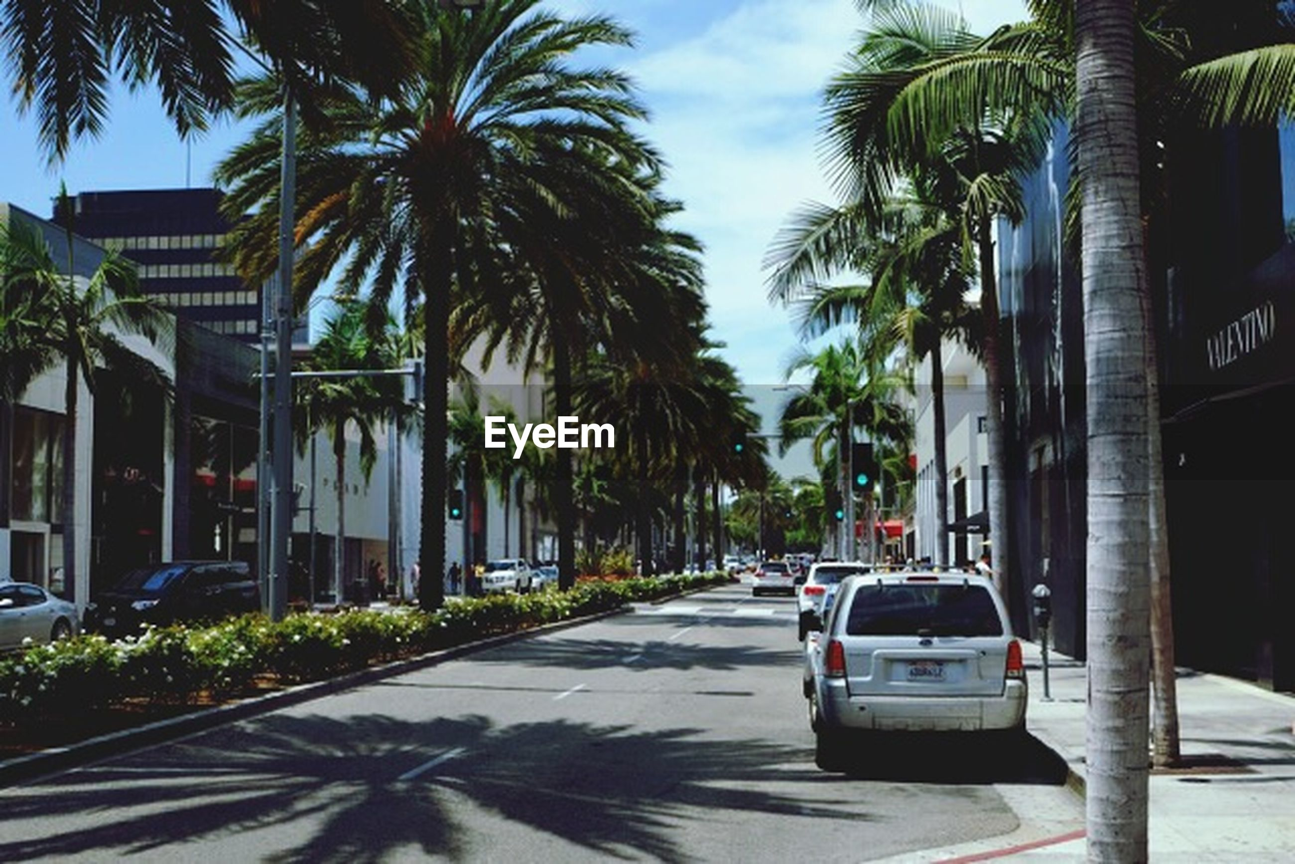 palm tree, tree, building exterior, architecture, built structure, street, transportation, the way forward, car, road, sunlight, city, sky, land vehicle, mode of transport, incidental people, shadow, tree trunk, day, outdoors