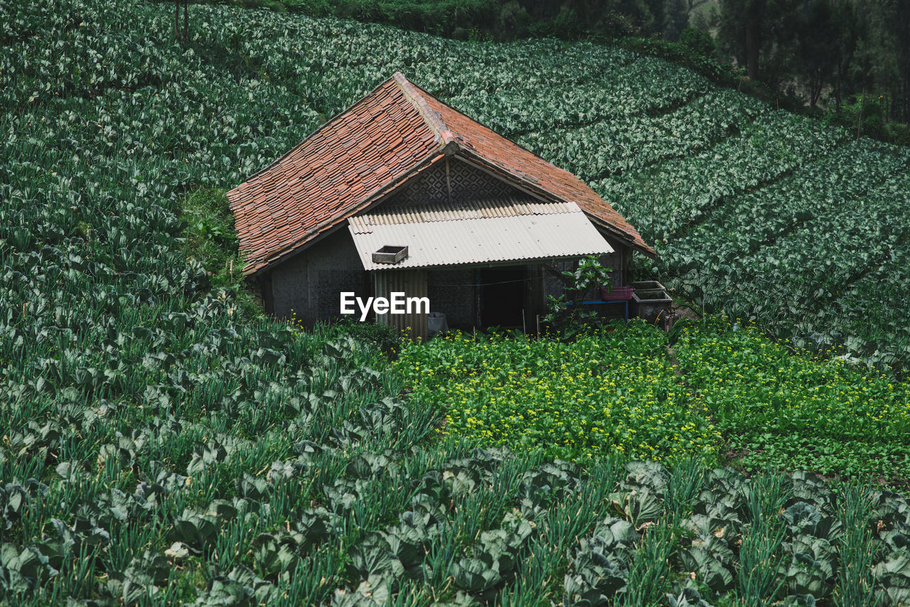 High Angle View Of House Amidst Agricultural Field