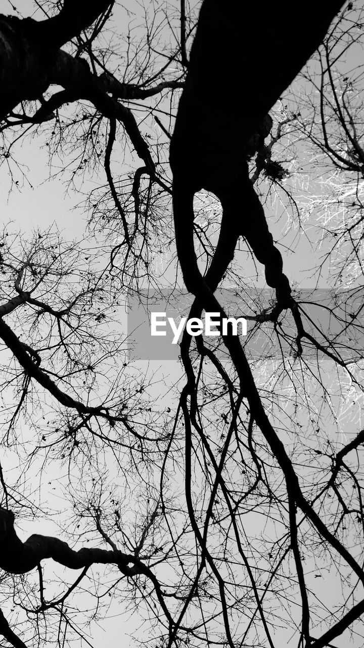 bare tree, branch, tree, silhouette, nature, outdoors, low angle view, beauty in nature, day, no people, sky