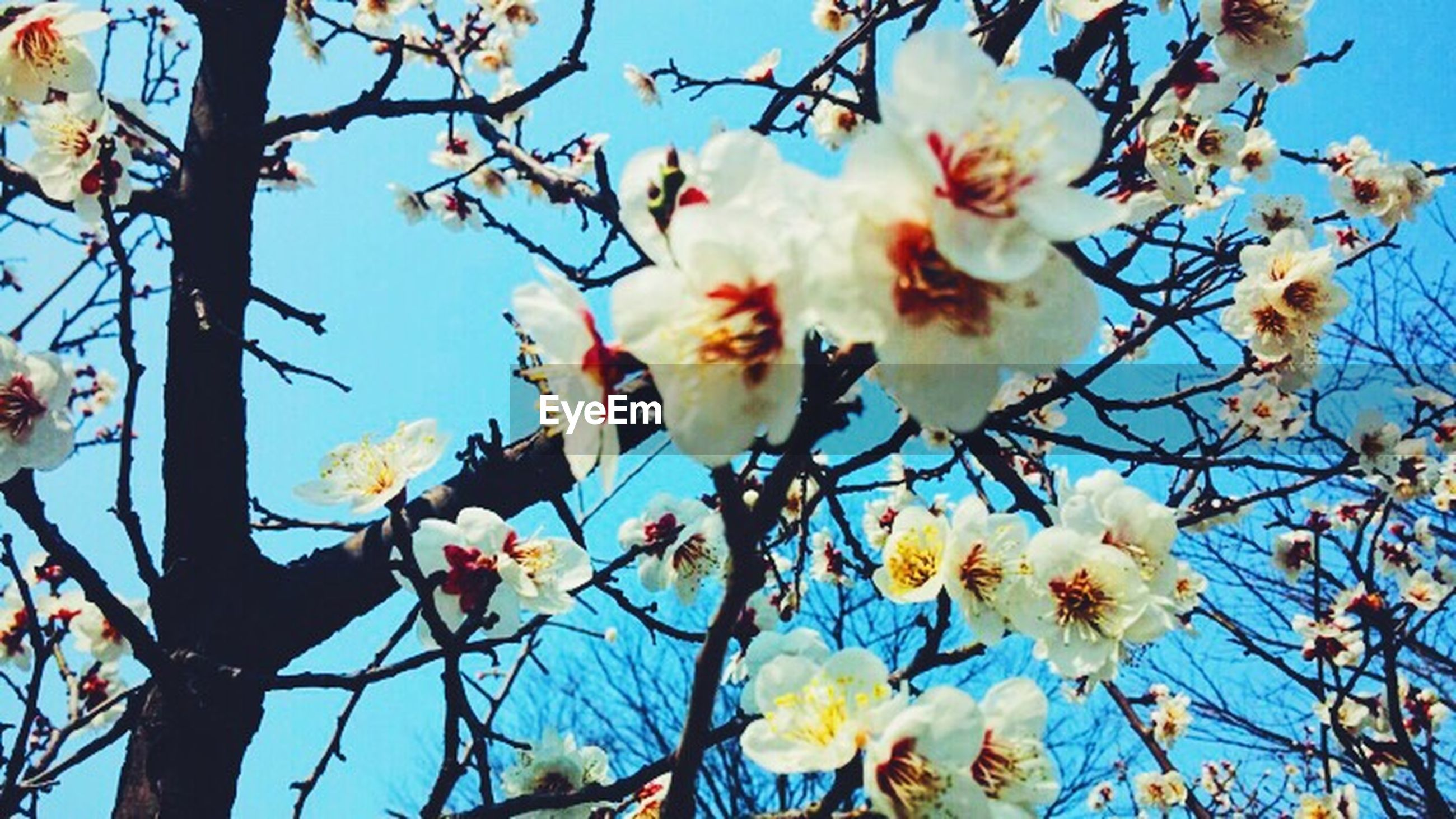 flower, low angle view, fragility, branch, freshness, petal, tree, blue, beauty in nature, white color, nature, blossom, cherry blossom, blooming, sky, growth, clear sky, bird, flower head, day