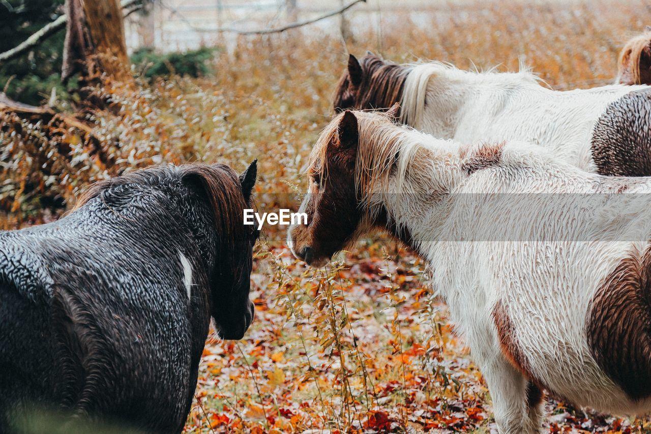 View of two horses on field