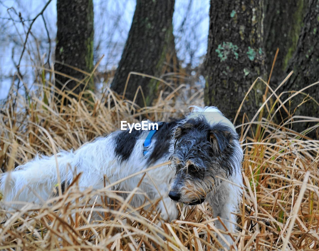 animal themes, animal, one animal, mammal, plant, vertebrate, relaxation, domestic animals, animal wildlife, no people, nature, day, domestic, pets, tree, animals in the wild, canine, grass, dog, focus on foreground, animal head, stick - plant part, mouth open