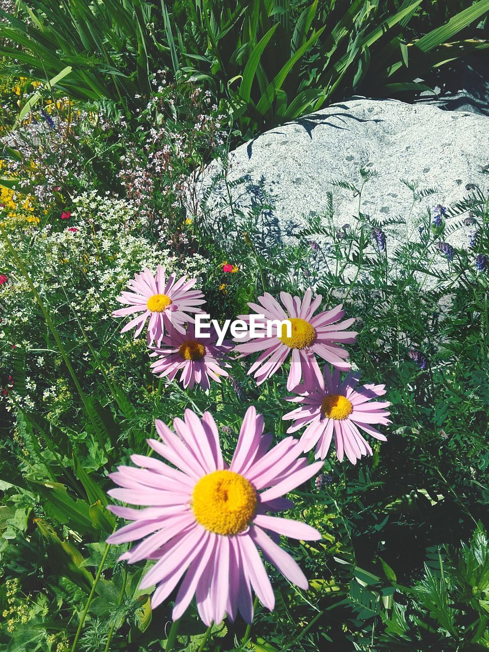 flower, beauty in nature, petal, nature, fragility, growth, freshness, plant, flower head, outdoors, blooming, day, no people, yellow, close-up