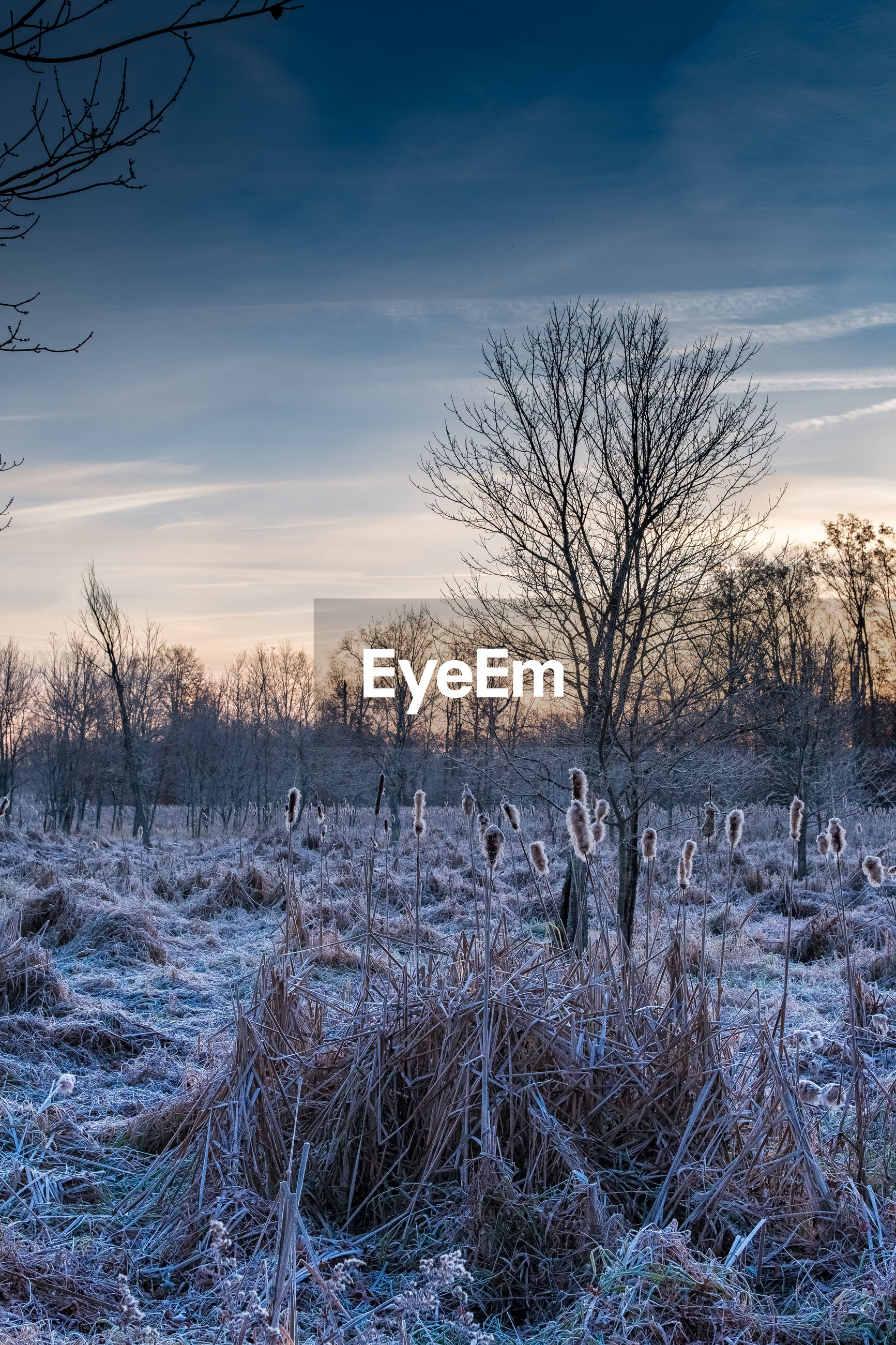 BARE TREES ON FIELD DURING WINTER AGAINST SKY