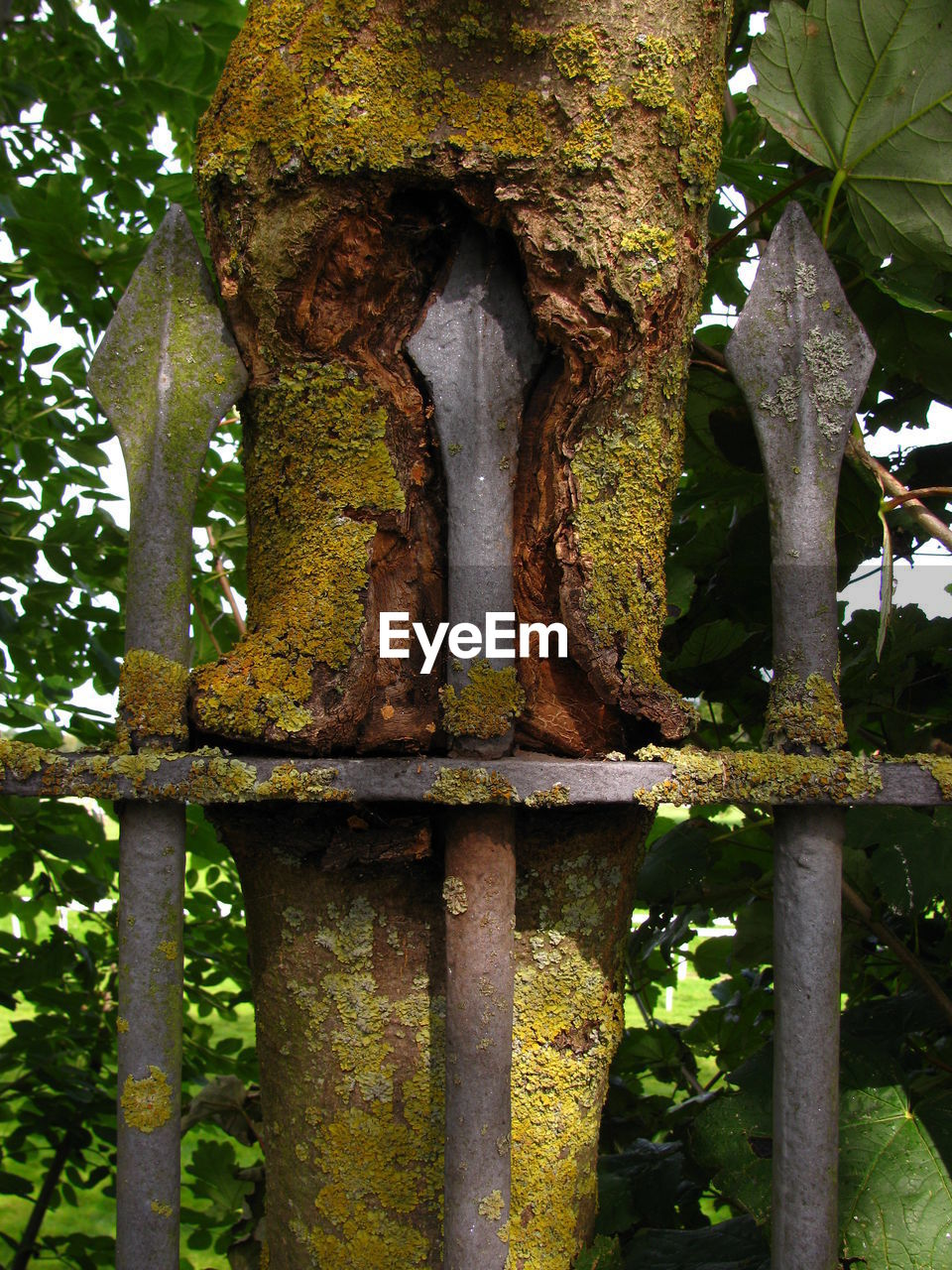 Tree trunk covered with moss in front of fence