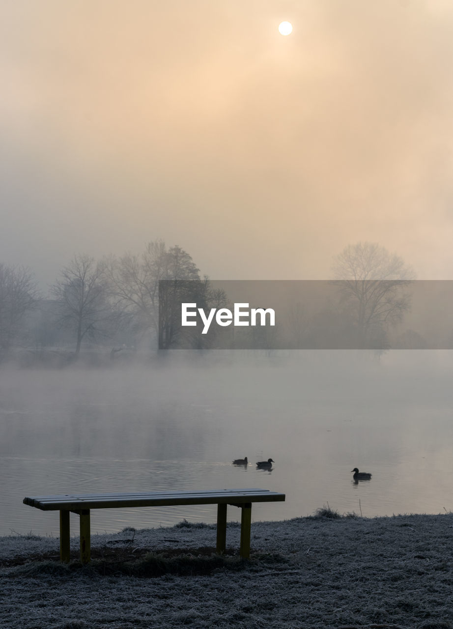 SCENIC VIEW OF FOG BY TREES AGAINST SKY