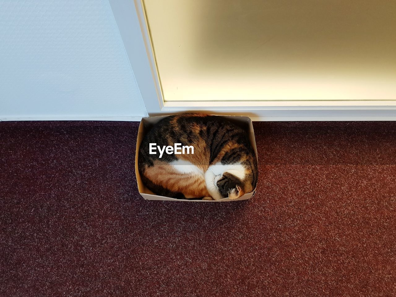 High angle view of cat resting on floor