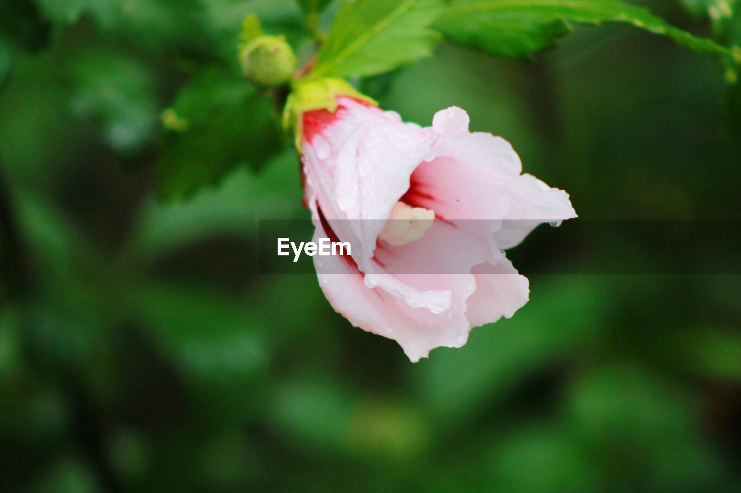 flower, petal, flower head, nature, fragility, pink color, growth, beauty in nature, rose - flower, no people, freshness, plant, blooming, close-up, day, springtime, outdoors, focus on foreground, wild rose