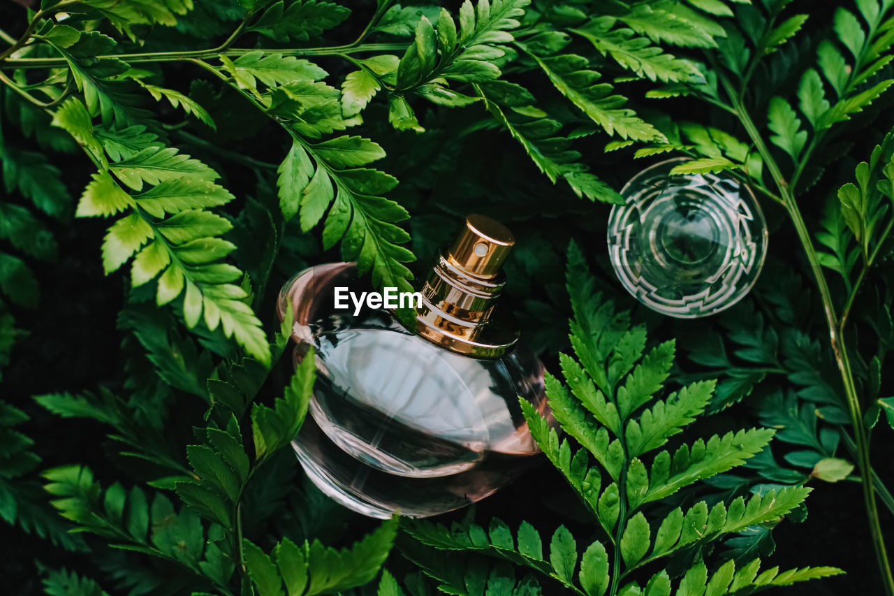 Close-up of perfume sprayer amidst plants