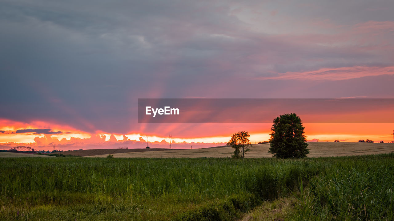 sky, sunset, cloud - sky, beauty in nature, environment, scenics - nature, plant, landscape, field, tranquil scene, tranquility, land, grass, orange color, nature, growth, non-urban scene, tree, no people, idyllic, outdoors