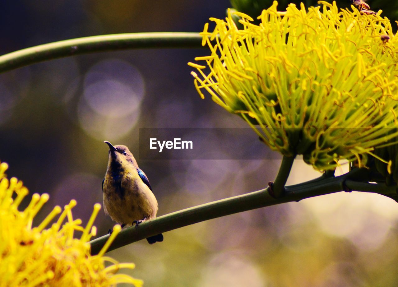 bird, animal, animal themes, animals in the wild, animal wildlife, vertebrate, one animal, perching, plant, flowering plant, flower, close-up, focus on foreground, no people, beauty in nature, day, nature, selective focus, outdoors, vulnerability