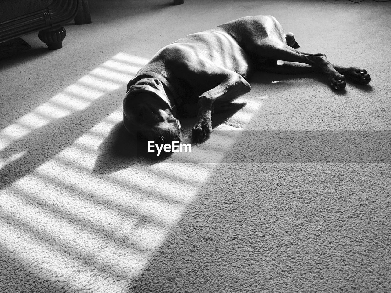 pets, domestic animals, canine, dog, one animal, domestic, mammal, animal themes, shadow, sunlight, animal, vertebrate, high angle view, relaxation, carpet - decor, full length, nature, street, lying down, day, no people
