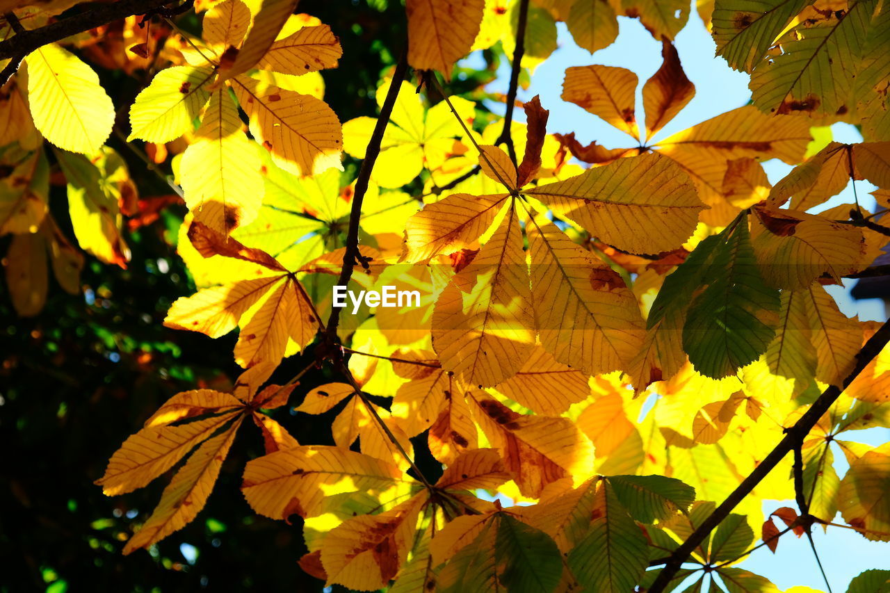 plant part, leaf, plant, yellow, growth, close-up, beauty in nature, nature, no people, vulnerability, day, fragility, leaves, outdoors, flowering plant, sunlight, autumn, flower, focus on foreground, freshness, maple leaf, change, flower head, natural condition