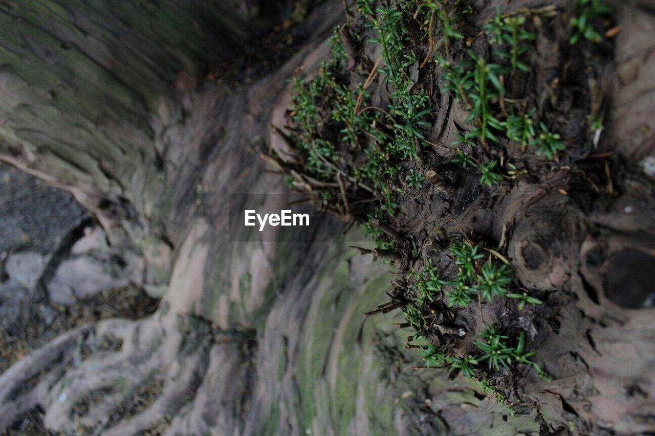 nature, no people, day, moss, outdoors, beauty in nature, tranquility, tree trunk, plant, tree, close-up