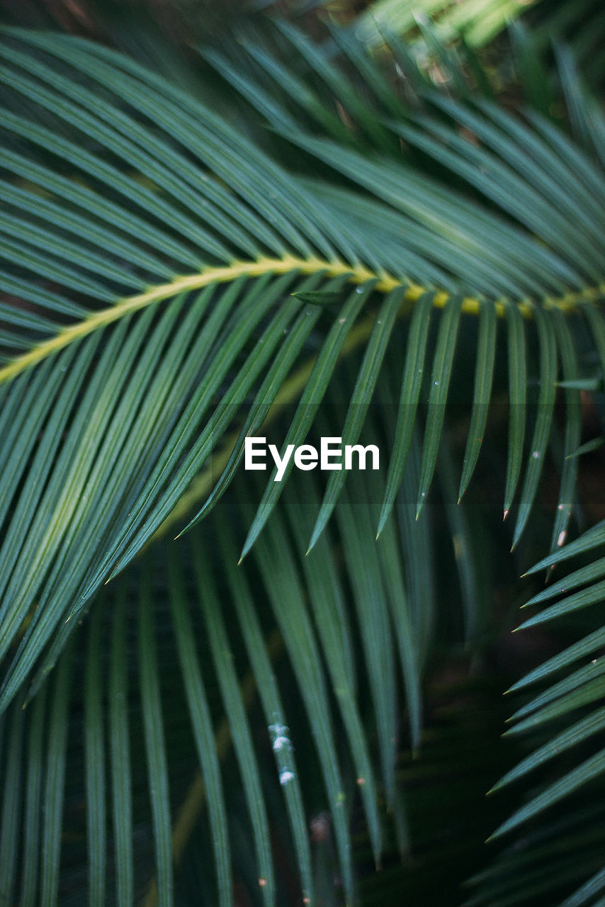 green color, palm leaf, palm tree, leaf, growth, plant part, frond, plant, beauty in nature, tropical climate, close-up, no people, tree, nature, day, natural pattern, full frame, pattern, outdoors, backgrounds, leaves, rainforest