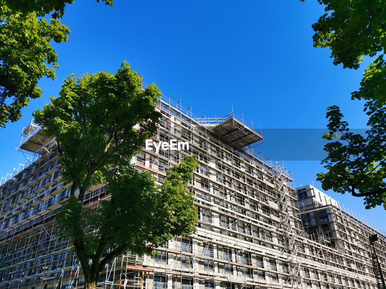 LOW ANGLE VIEW OF TREE AND BUILDING AGAINST BLUE SKY