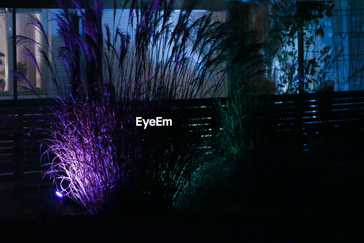 illuminated, night, plant, nature, architecture, no people, tree, purple, built structure, building exterior, outdoors, light, building, auto post production filter, water, motion, dusk, dark, bare tree
