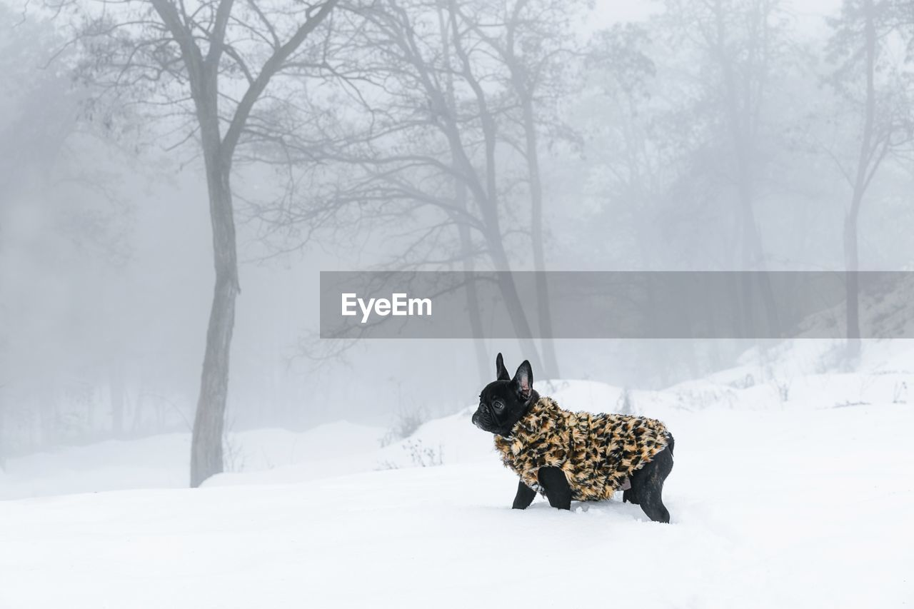 snow, winter, cold temperature, one animal, animal themes, pets, mammal, domestic animals, animal, tree, domestic, vertebrate, canine, dog, land, no people, plant, nature, field, outdoors, extreme weather, snowing