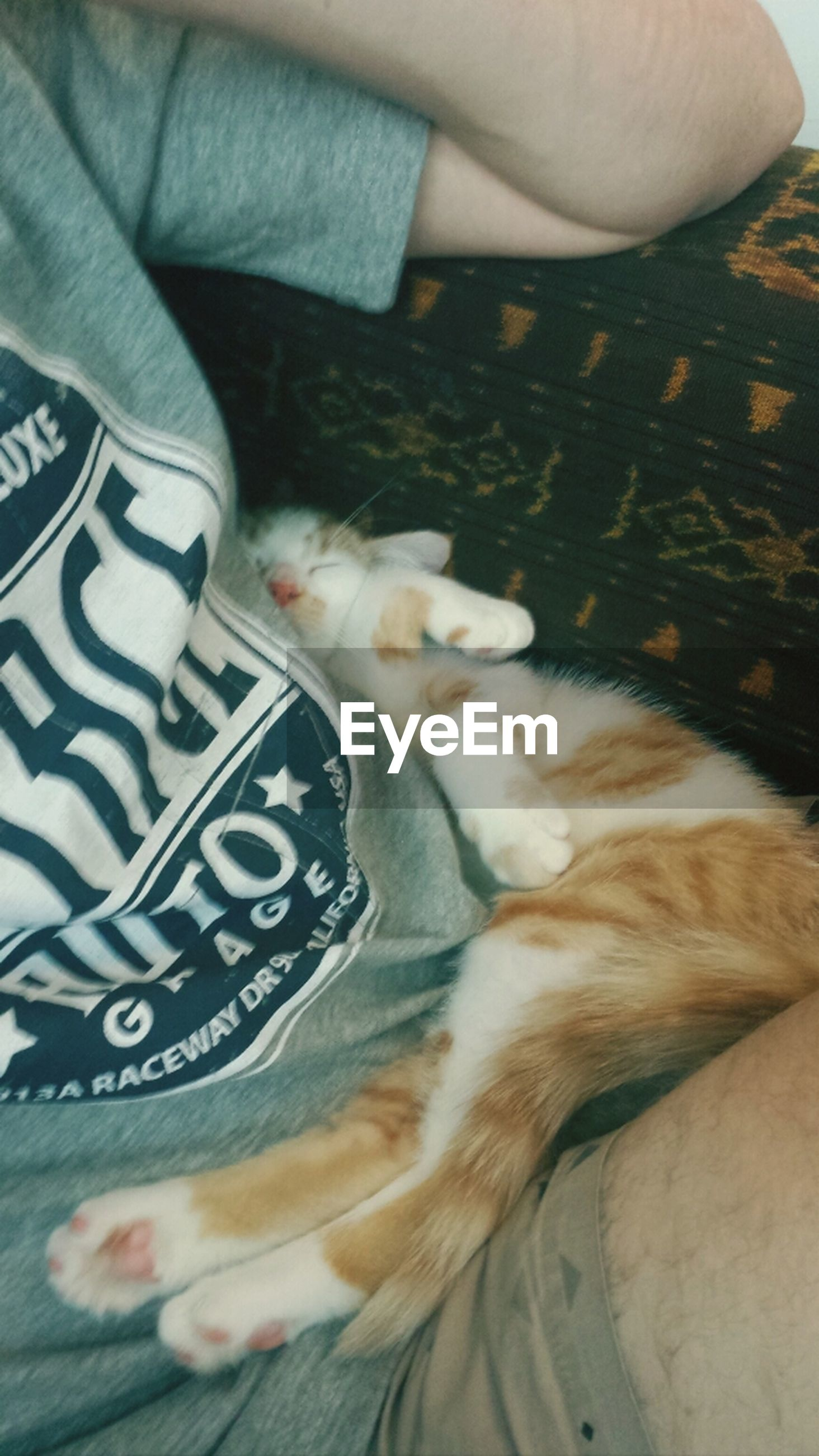 pets, domestic animals, mammal, domestic cat, indoors, animal themes, one animal, cat, relaxation, feline, resting, lying down, sleeping, bed, whisker, high angle view, home interior, eyes closed, close-up, sofa