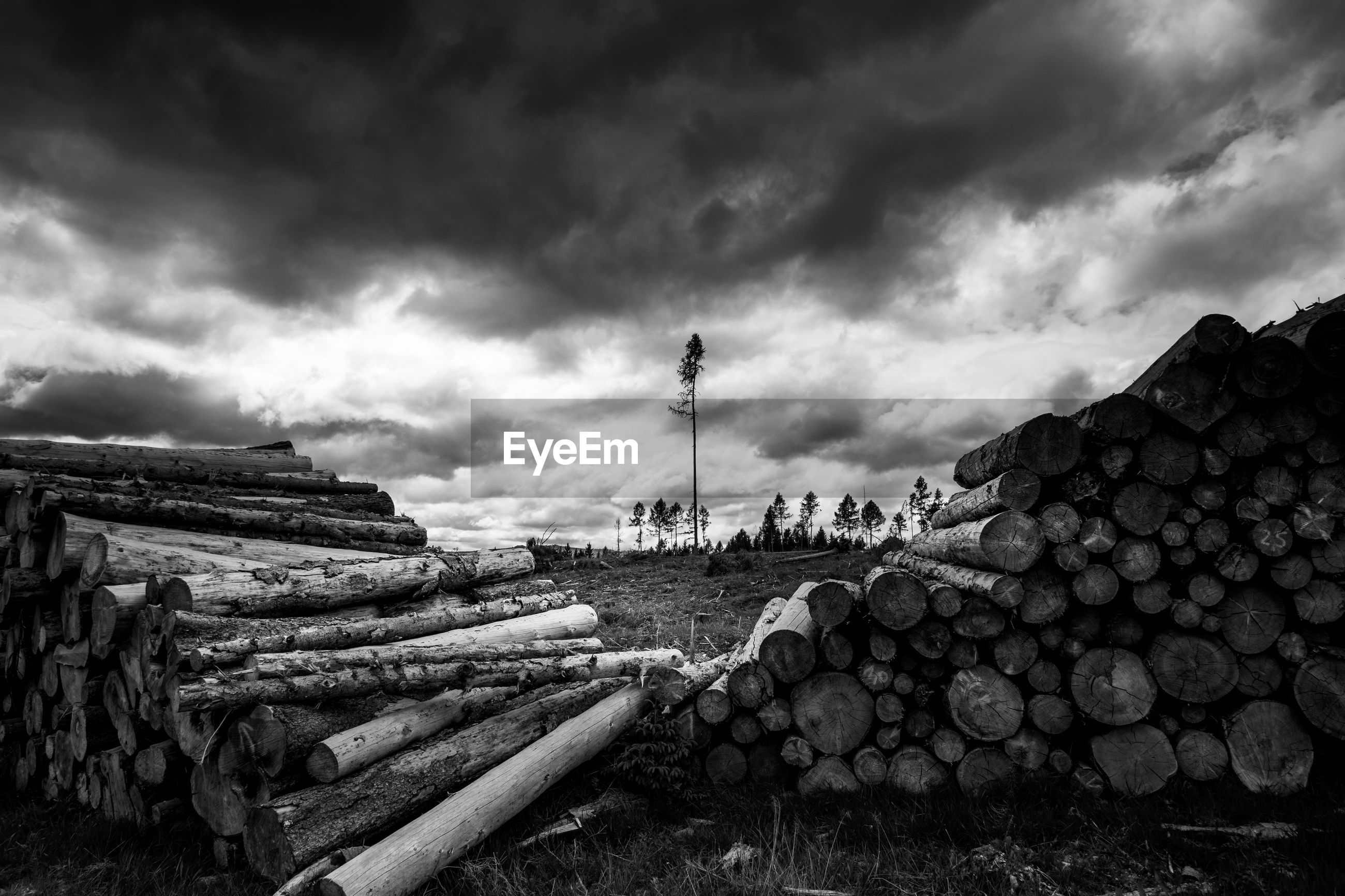 STACK OF LOGS ON FIELD AGAINST CLOUDY SKY