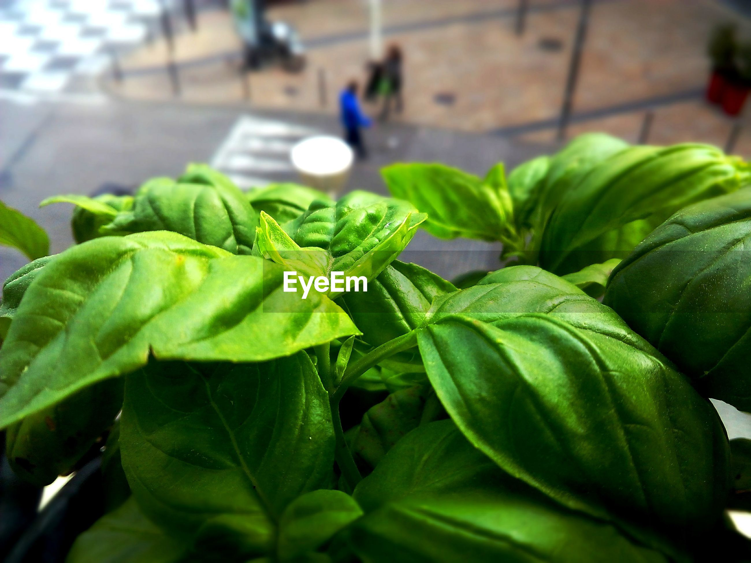 green color, leaf, focus on foreground, close-up, freshness, plant, indoors, food and drink, selective focus, growth, green, food, vegetable, healthy eating, no people, day, table, still life, nature, potted plant