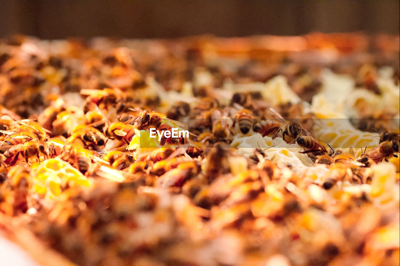 food and drink, food, selective focus, freshness, close-up, no people, still life, indoors, healthy eating, spice, abundance, wellbeing, vegetable, dried food, ingredient, nature, pizza, leaf, ready-to-eat, dry, surface level, snack, temptation, chopped