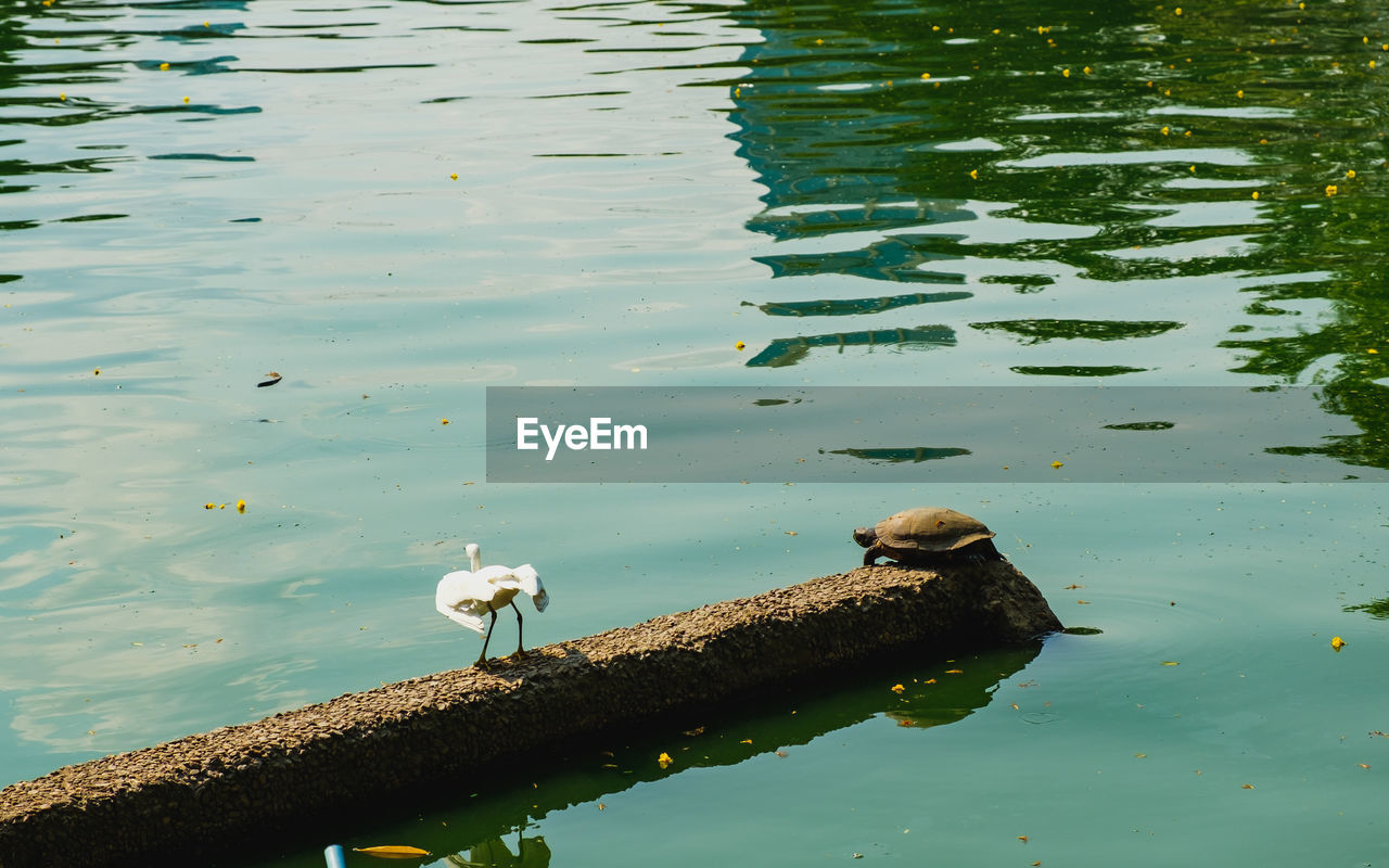 water, lake, animal wildlife, animal, animal themes, bird, animals in the wild, vertebrate, reflection, group of animals, high angle view, no people, nature, day, waterfront, beauty in nature, perching, outdoors, animal family