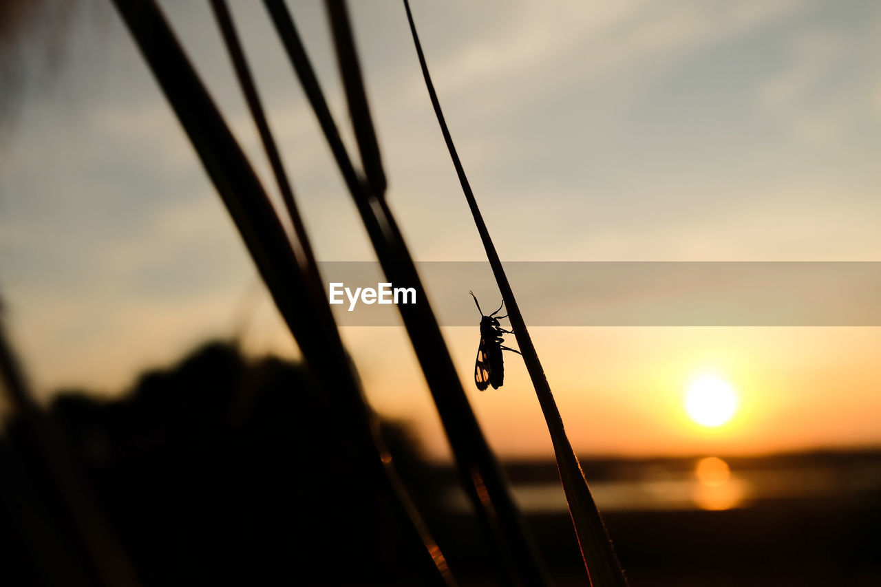sunset, nature, sky, water, focus on foreground, outdoors, beauty in nature, no people, silhouette, one animal, close-up, scenics, animal themes, sea, day
