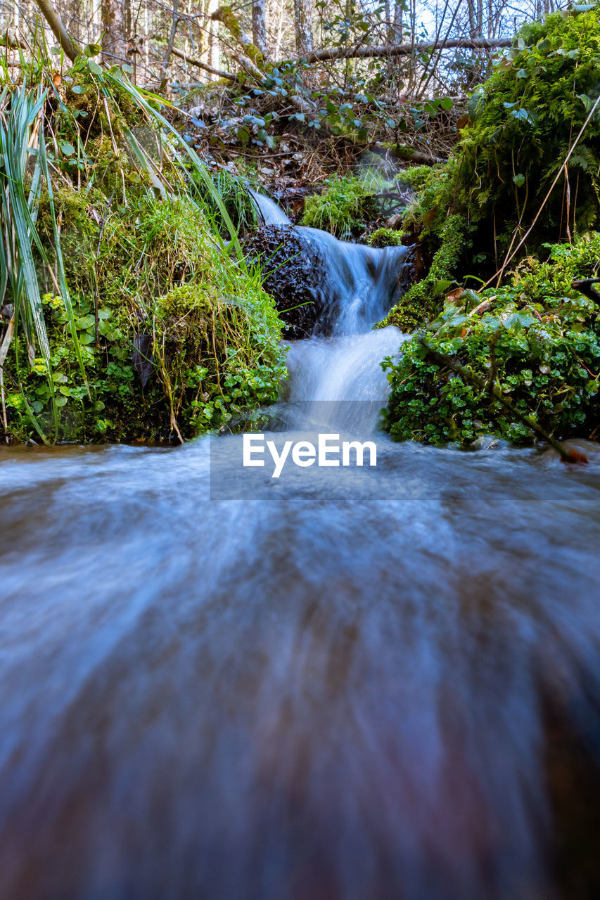 water, plant, tree, motion, beauty in nature, flowing water, no people, forest, scenics - nature, long exposure, nature, land, waterfall, blurred motion, growth, day, rock, flowing, solid, outdoors, power in nature, surface level, stream - flowing water, falling water