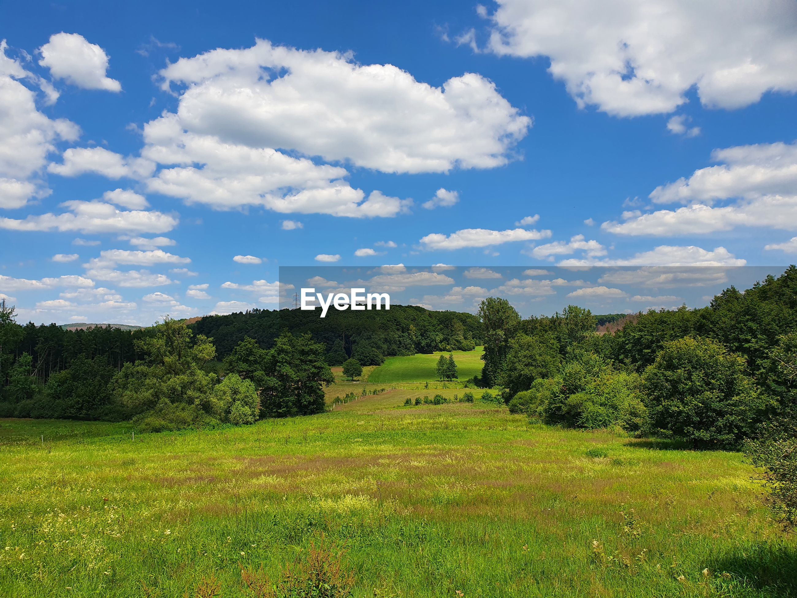 SCENIC VIEW OF TREES ON FIELD AGAINST SKY