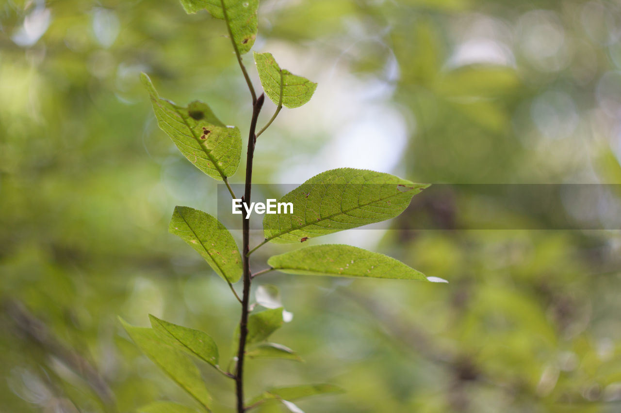 leaf, green color, growth, nature, plant, no people, day, outdoors, close-up, beauty in nature, animal themes, freshness