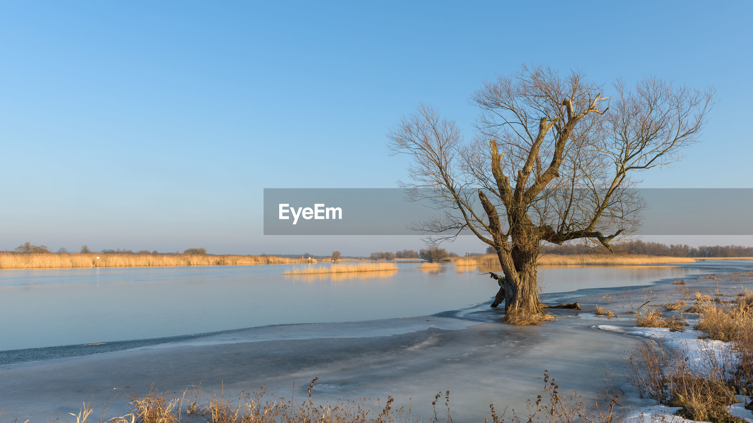 BARE TREE IN FROZEN LAKE AGAINST CLEAR BLUE SKY