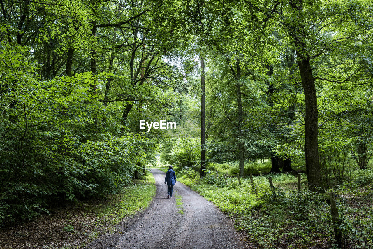 Rear view of woman walking on road amidst trees in forest
