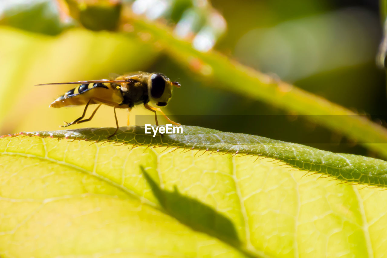 insect, animals in the wild, leaf, animal themes, one animal, green color, close-up, plant, day, nature, animal wildlife, outdoors, no people, beauty in nature