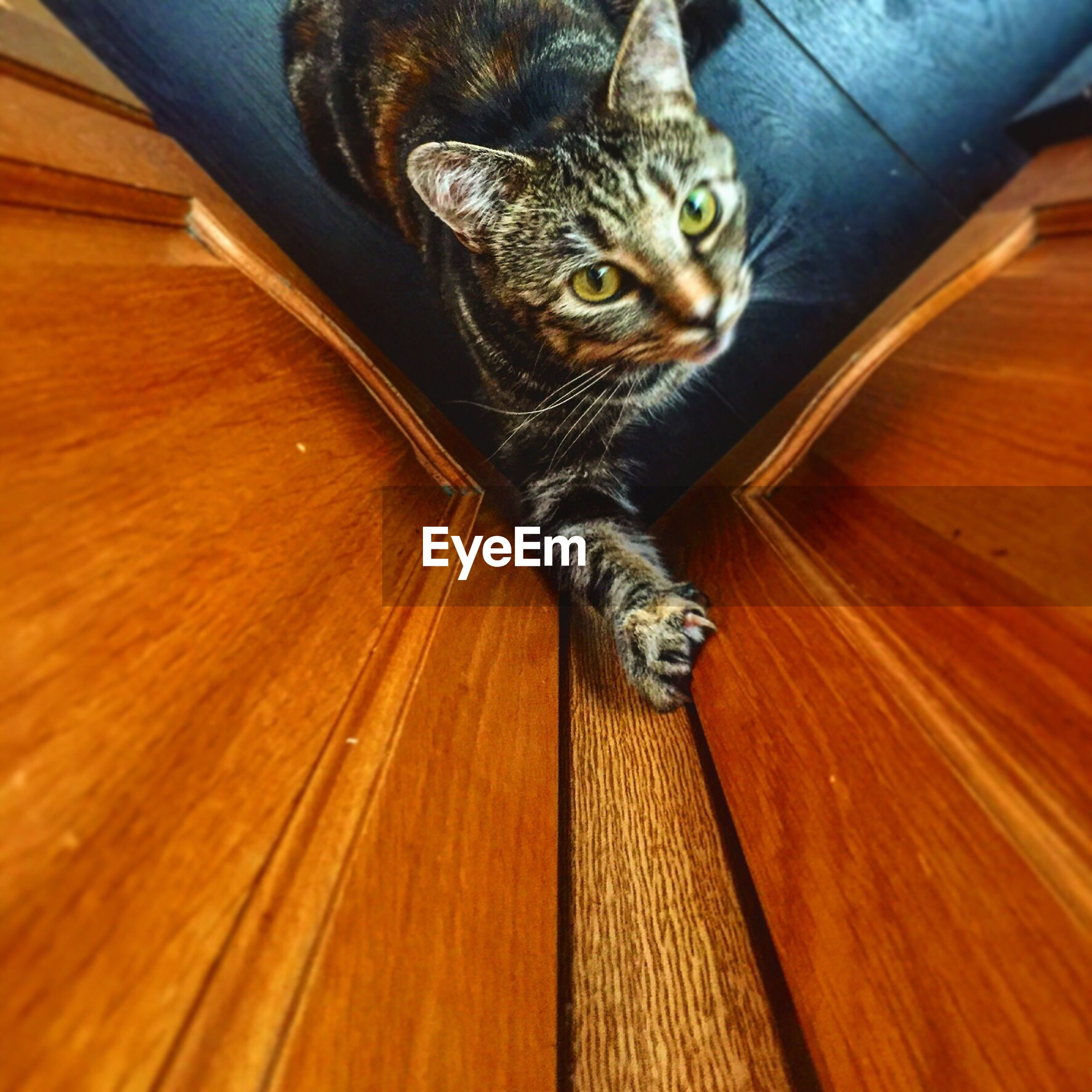 Directly above view of tabby by cabinets in kitchen at home
