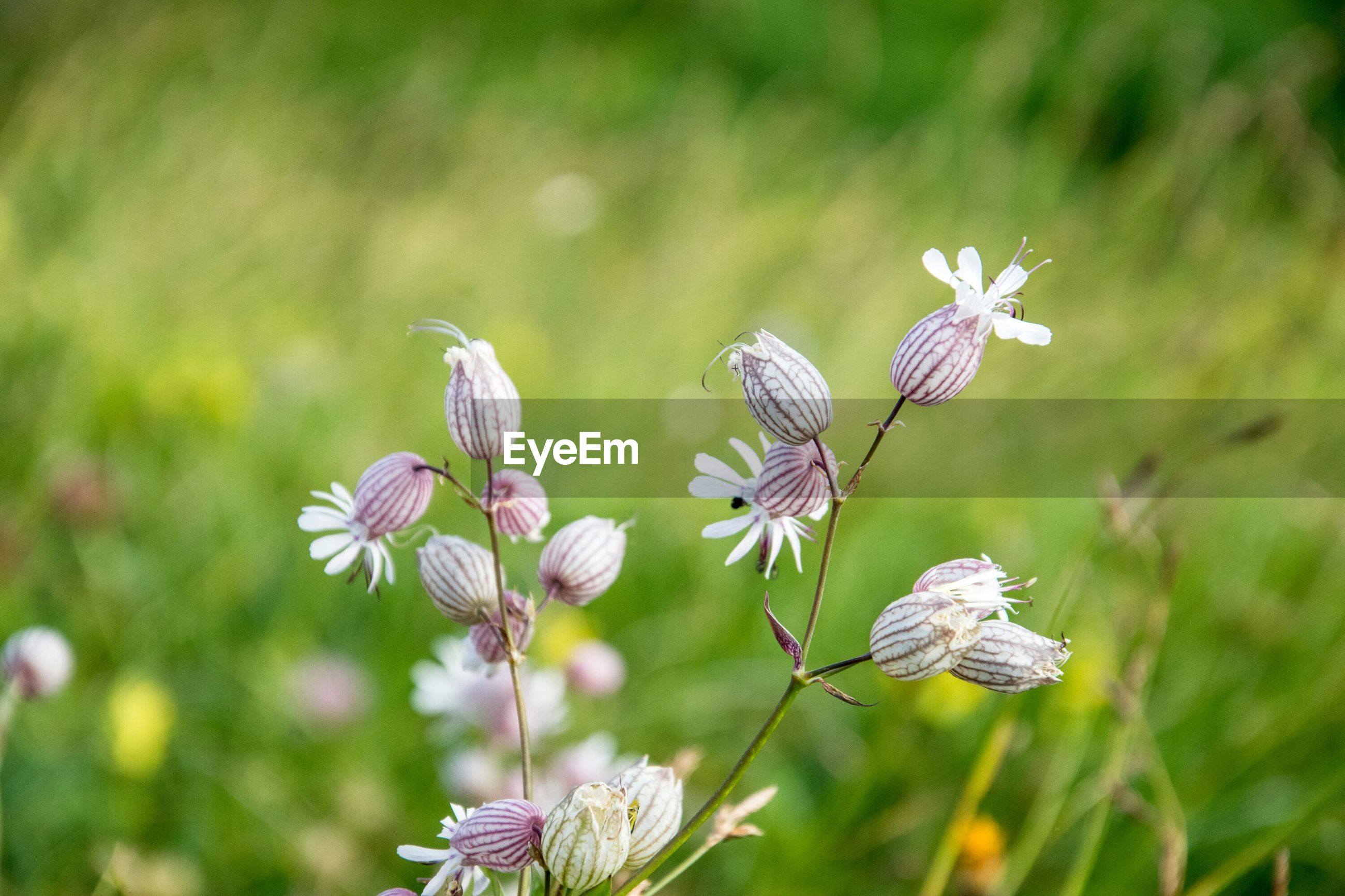 White flowering plant growing on field
