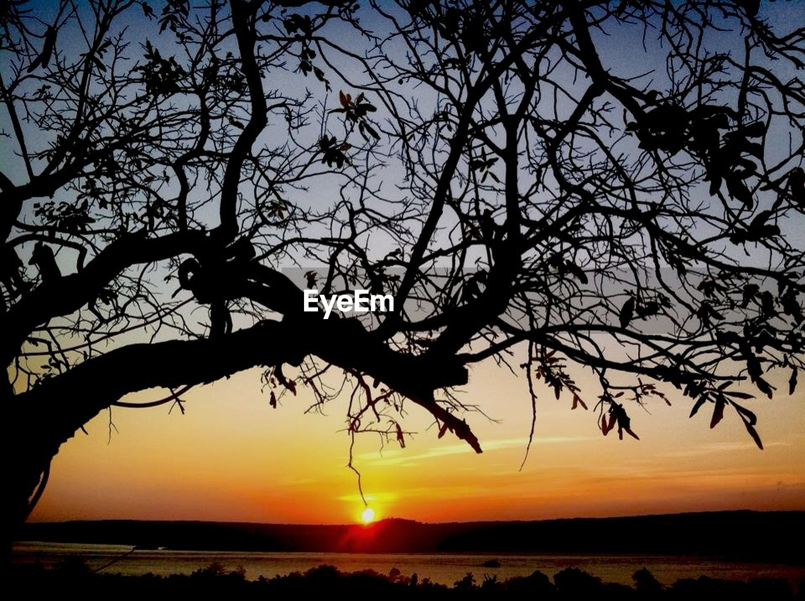 sunset, silhouette, tranquil scene, sun, tranquility, scenics, beauty in nature, water, branch, orange color, nature, sky, tree, idyllic, sea, bare tree, sunlight, reflection, horizon over water, lake