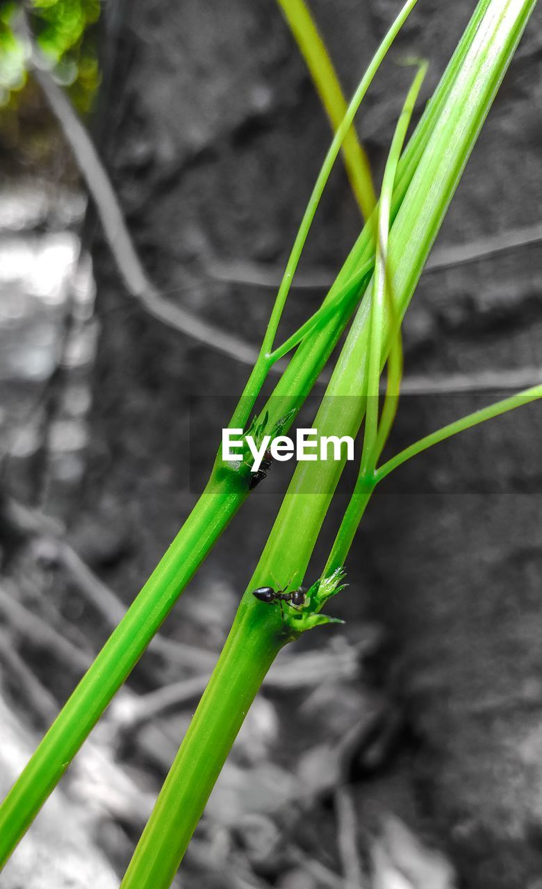 green color, plant, nature, no people, growth, close-up, animal wildlife, day, animals in the wild, animal themes, one animal, plant part, animal, invertebrate, focus on foreground, leaf, grass, selective focus, insect, outdoors, blade of grass