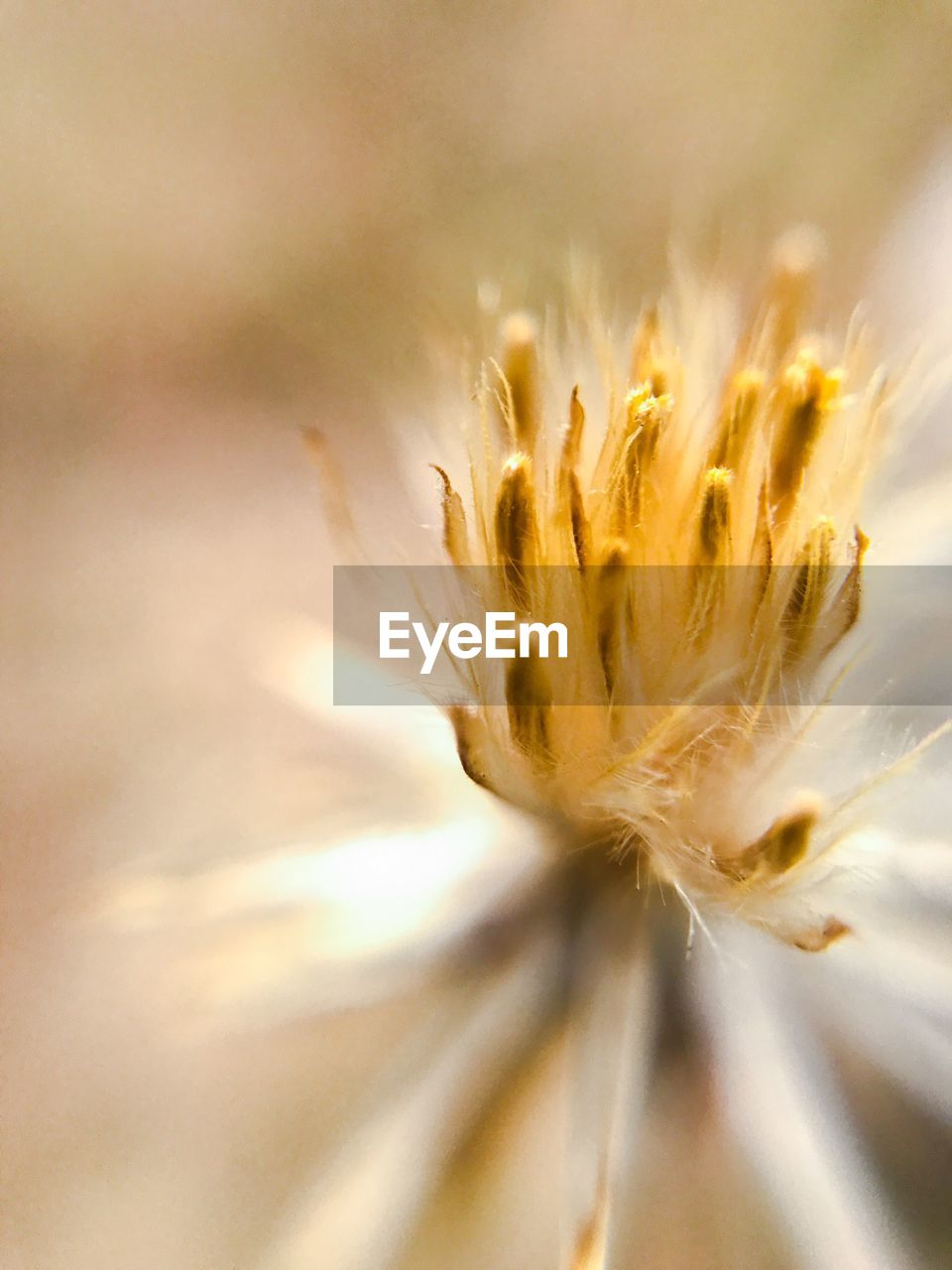 flower, fragility, flower head, growth, freshness, petal, nature, close-up, beauty in nature, selective focus, softness, stamen, botany, plant, macro, springtime, pollen, blossom, no people, seed, day, uncultivated, outdoors, soft focus