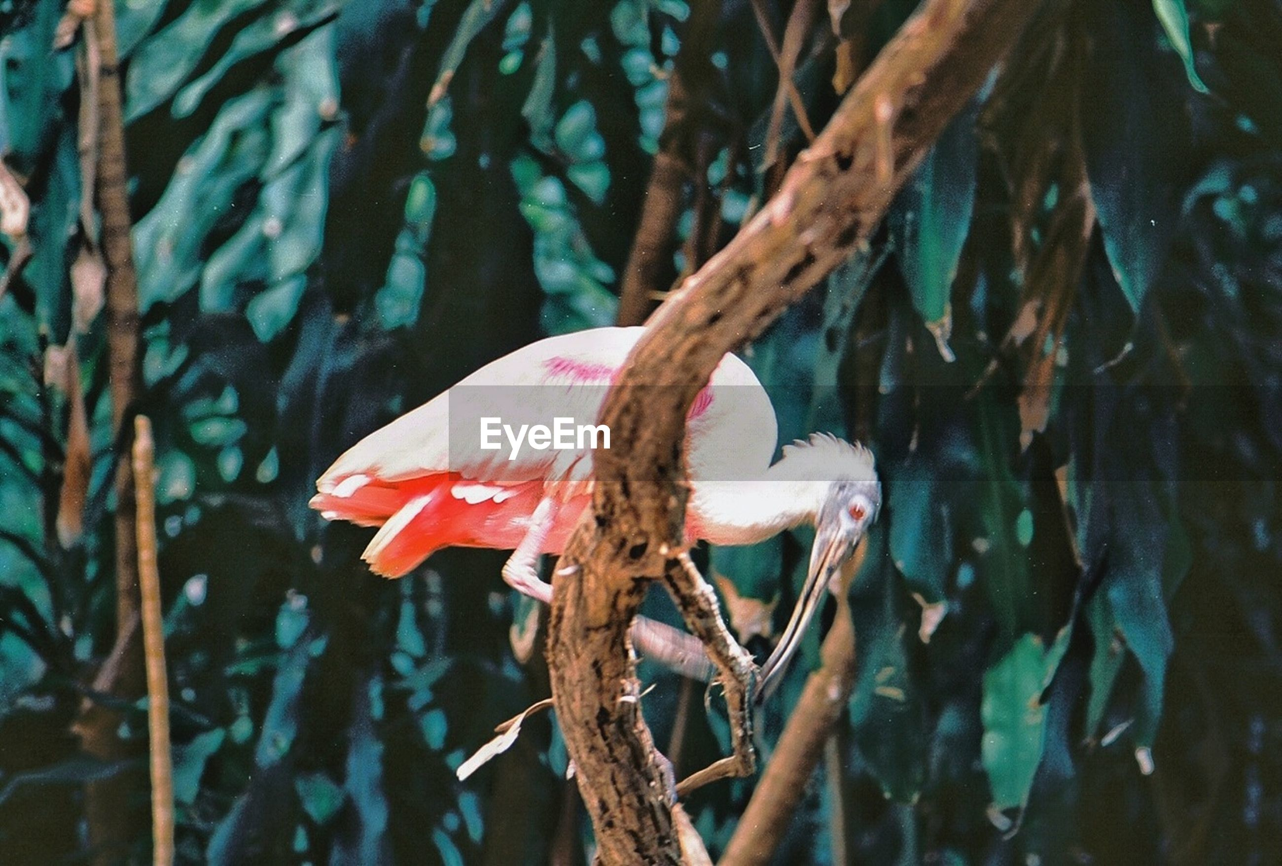 animal themes, one animal, animals in the wild, wildlife, bird, perching, focus on foreground, nature, branch, close-up, full length, beauty in nature, tree, side view, outdoors, day, no people, zoology, beak, plant