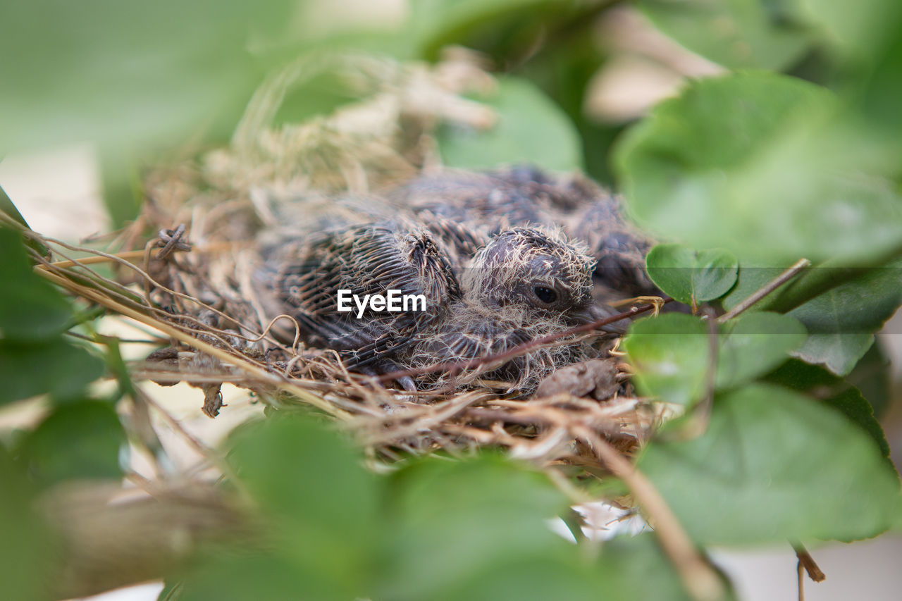 selective focus, animal themes, animal, animals in the wild, nature, animal wildlife, close-up, plant, leaf, plant part, one animal, young animal, animal nest, no people, day, bird, vertebrate, bird nest, young bird, outdoors, animal head