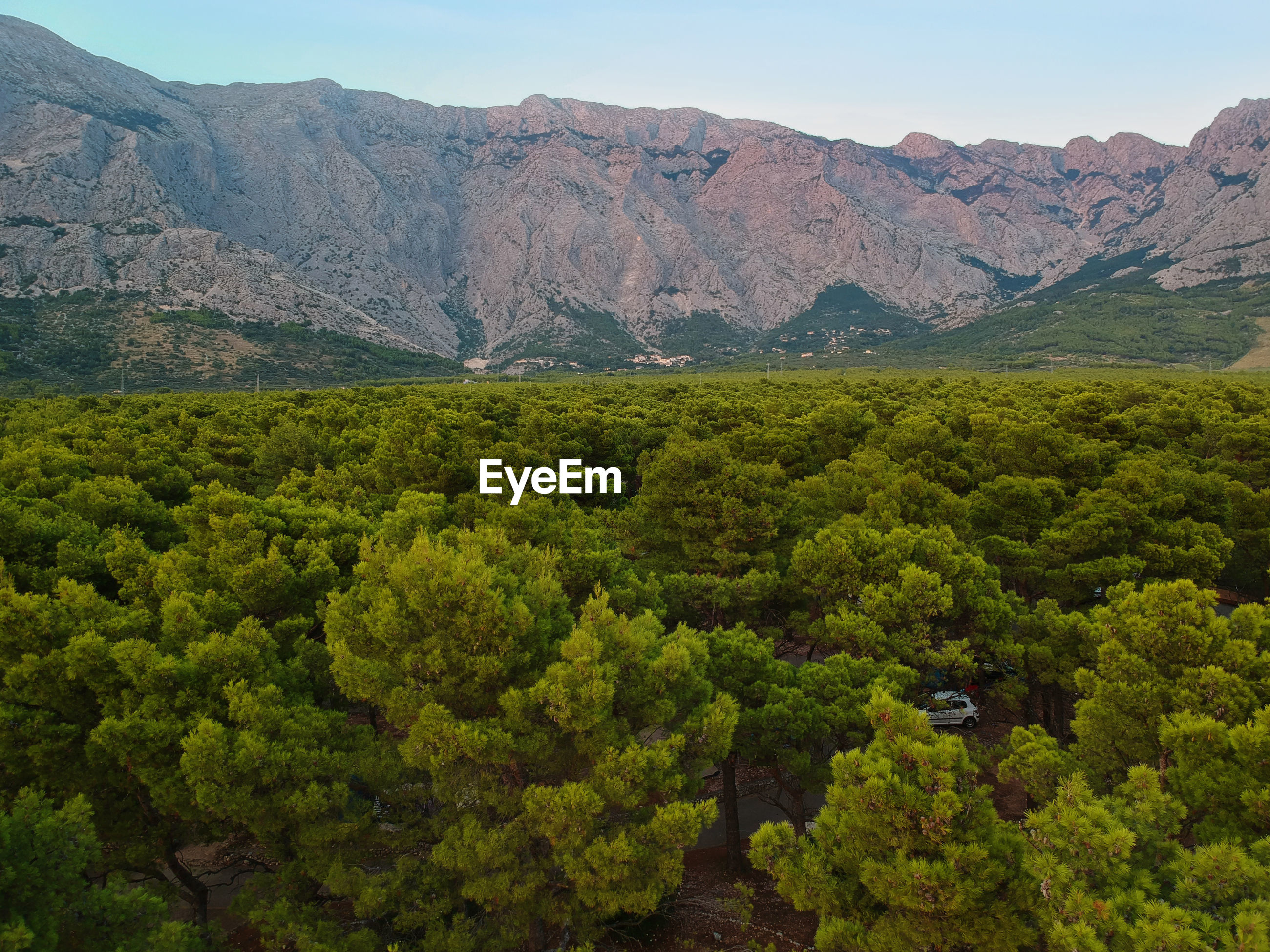 An aerial view from drone to the trees and mountain in croatia