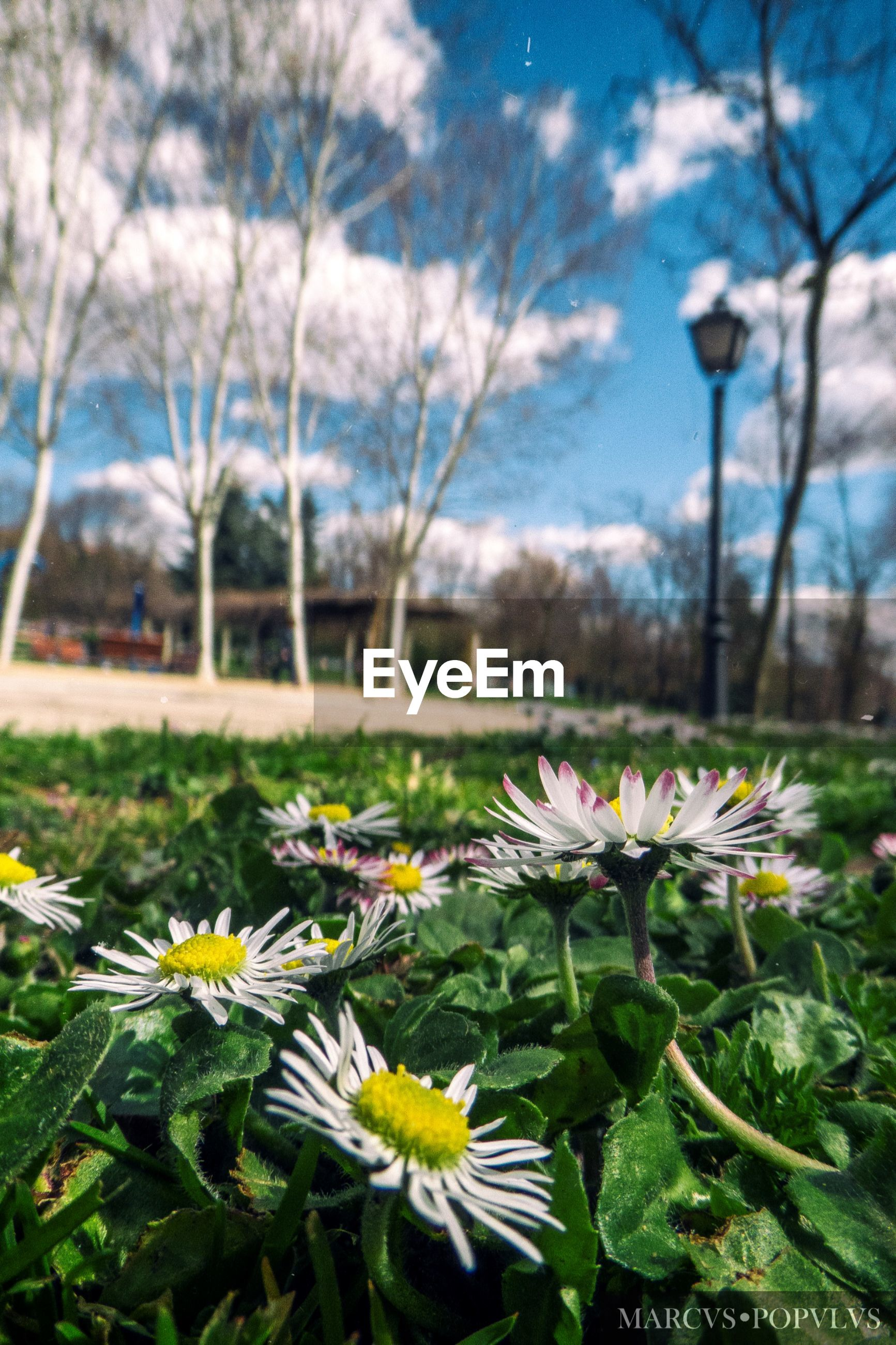 plant, flowering plant, flower, freshness, growth, beauty in nature, fragility, nature, vulnerability, inflorescence, flower head, day, close-up, petal, no people, field, tree, outdoors, focus on foreground, white color, pollen, springtime