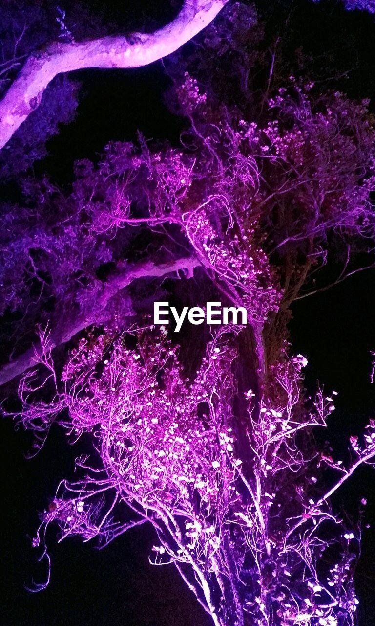 illuminated, purple, no people, growth, indoors, night, nature, close-up