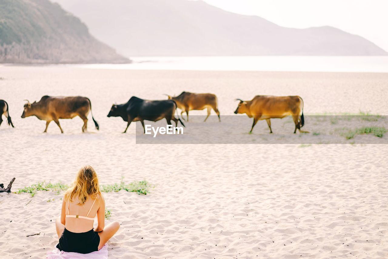 Rear view of woman sitting by cows at beach against sky